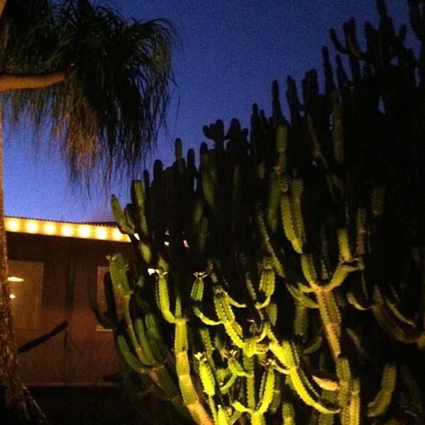 Cactus on Kauai Photo