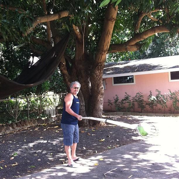 Bob Kurtz Harvesting Mangoes