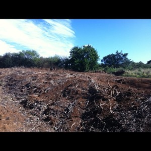 Clearing land for the solar farm to serve all of Kiahuna.