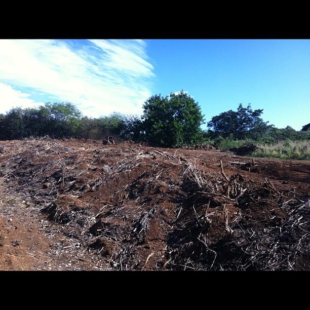 clearing land for solar farm at kiahuna