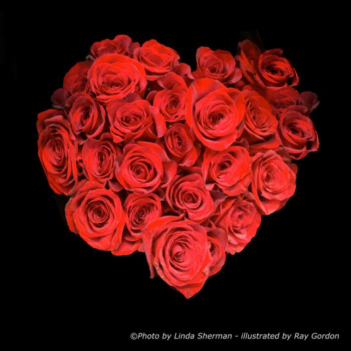 valentines rose heart by ray gordon
